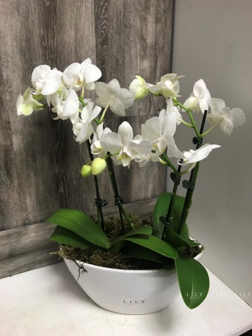 orchid_boad