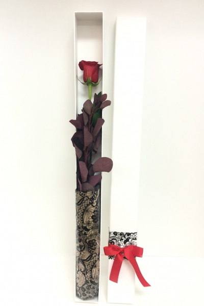 the_one_and_only_long_stem_ecuador_rose_35